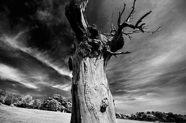 Poza cu un copac batran